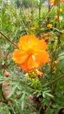 Красивый естественный цветок стоковое изображение rf