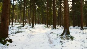 Красивый лес в зиме в bei Линце Kirchschlag в Верхней Австрии видеоматериал