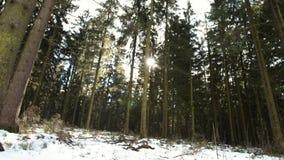 Красивый лес в зиме в bei Линце Kirchschlag в Верхней Австрии сток-видео