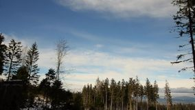 Красивый лес в зиме в bei Линце Kirchschlag в Верхней Австрии акции видеоматериалы