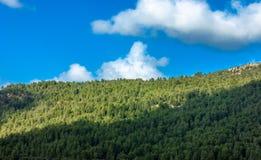 Красивый лес в Марокко Стоковое фото RF