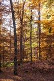 Красивый лес в свете бабьего лета Стоковые Изображения RF
