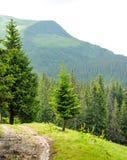 Красивый лес горы Стоковая Фотография