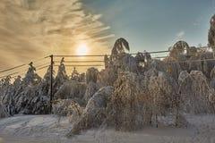 Красивый лес зимы - фото 15 Стоковое Фото