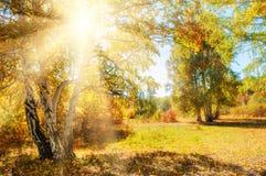 Красивый лес осени на солнечном дне Стоковые Изображения RF