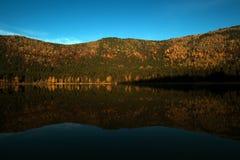 Красивый лес отражая на спокойном озере Стоковые Фото