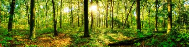 Красивый лес с ярким солнцем стоковое изображение