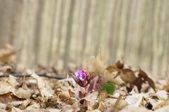 Красивый лес цветка весной Стоковая Фотография RF