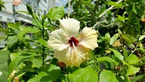 Красивый желтый цвет цветка Стоковое Изображение RF