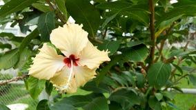 Красивый желтый цвет цветка Стоковое Фото