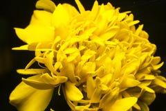 Красивый желтый цвет стоковые фото