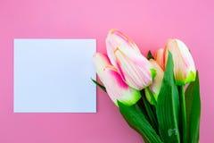Красивый желтых цветка и карточки тюльпана, примечания и бирки с плоским положением на розовой предпосылке Стоковое Изображение