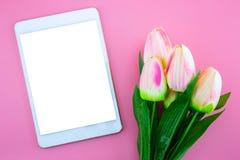 Красивый желтых цветка и таблетки тюльпана, с плоским положением на розовой предпосылке Стоковое фото RF