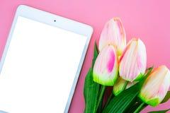 Красивый желтых цветка и таблетки тюльпана, с плоским положением на розовой предпосылке Стоковые Изображения RF