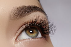 Красивый женский глаз с весьма длинными ресницами, черный состав вкладыша Совершенный состав, длинные плетки Глаза моды крупного  стоковое изображение
