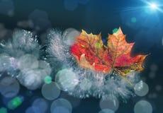 Красивый желтый красный зеленый кленовый лист осени на гирлянде рождества сусали с славным запачканным bokeh и мягкой голубой пре Стоковое фото RF