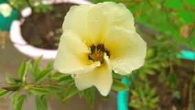 Красивый желтый фокус цветка цвета Стоковая Фотография
