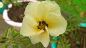 Красивый желтый фокус цветка цвета Стоковое Фото