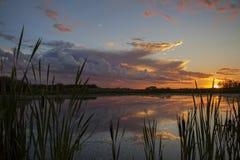 Красивый заход солнца над прудом утки Стоковое Изображение