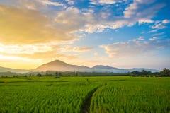 Красивый заход солнца над рисовыми полями стоковые изображения rf