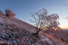 Красивый заход солнца на горе, при снег покрывая землю, заморозок на ветвях деревьев и теплые светлые отражения стоковое фото