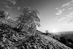 Красивый заход солнца на горе, при снег покрывая землю и заморозок на ветвях деревьев стоковые фотографии rf