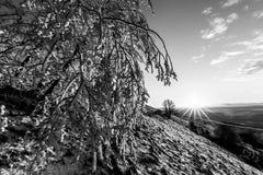 Красивый заход солнца на горе, при снег покрывая землю и заморозок на ветвях деревьев стоковое фото rf