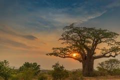 Красивый заход солнца с баобабом Lubango anisette Стоковое Изображение