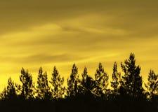 Красивый заход солнца с оранжевыми облаками стоковое изображение rf
