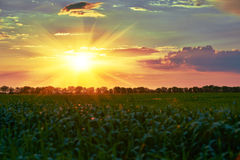 Красивый заход солнца весной Зеленое поле, одичалый ландшафт Большое солнце в облачном небе по мере того как польза вала текстуры Стоковое Изображение RF