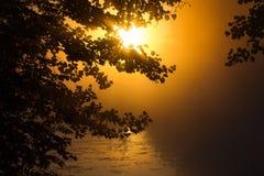 Красивый заход солнца в лесе очаровательная красота природы Стоковое Изображение RF