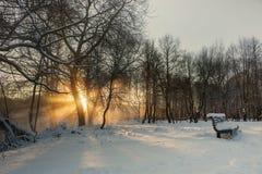 Красивый заход солнца зимы с деревьями в снеге Стоковая Фотография RF