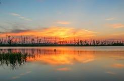 красивый заход солнца на сосне озера Стоковая Фотография
