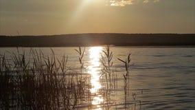 Красивый заход солнца реки сток-видео