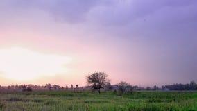 Красивый заход солнца с зеленой лужайкой и фиолетовым небом Стоковое Изображение