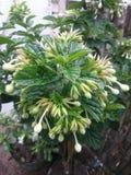 Красивый зацветать белых цветков Стоковая Фотография RF