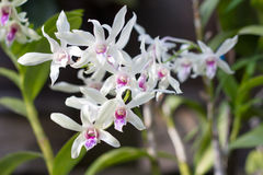 Красивый зацветать белых цветков Стоковые Фото