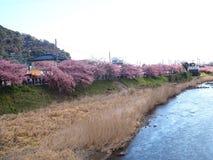Красивый зацветать Сакуры прекрасный на 2 сторонах реки в Японии стоковые изображения