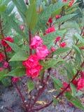 Красивый зацветать цветка Стоковое Фото