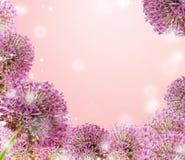 Красивый зацветая фиолетовый конец лукабатуна дизайн карточки вверх, приветствовать или свадьбы Сезонная предпосылка цветка Стоковое Изображение