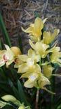Красивый зацветая цветок орхидеи в саде с естественной зеленой флористической предпосылкой Изумительные заводы для открытки и Стоковая Фотография RF