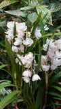 Красивый зацветая цветок орхидеи в саде с естественной зеленой флористической предпосылкой Изумительные заводы для открытки и Стоковые Фото