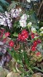 Красивый зацветая цветок орхидеи в саде с естественной зеленой флористической предпосылкой Изумительные заводы для открытки и Стоковые Изображения