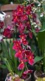 Красивый зацветая цветок орхидеи в саде с естественной зеленой флористической предпосылкой Изумительные заводы для открытки и Стоковое Изображение RF