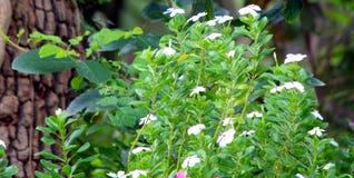 Красивый зеленый завод белых цветков стоковые изображения rf