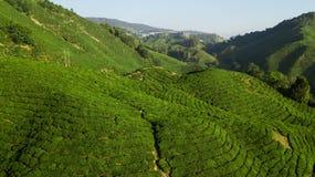 Красивый зеленый ландшафт плантации чая в гористых местностях Камеро стоковые фото