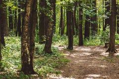 Красивый зеленый лес в лете Стоковые Изображения