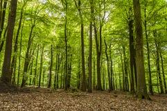 Красивый зеленый лес на солнечный день Стоковое фото RF