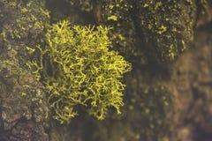 Красивый зеленый мох в древесине и свет как раз любят сказка в национальном парке секвойи Стоковые Изображения