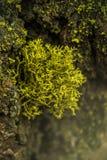 Красивый зеленый мох в древесине и свет как раз любят сказка в национальном парке секвойи Стоковая Фотография RF